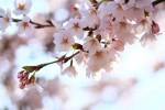 陽春の候の意味と春陽の候の違いは?時期はいつからいつまで?