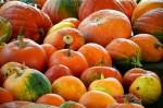 かぼちゃの種類別の名前と特徴!オレンジや白色、バターナッツも仲間?