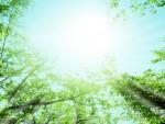 初夏の候の意味!盛夏の候との違いは使う時期で変わる!?